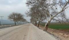 Çınar Ağaçlarının Bakımı ve Restorasyonu Projesi